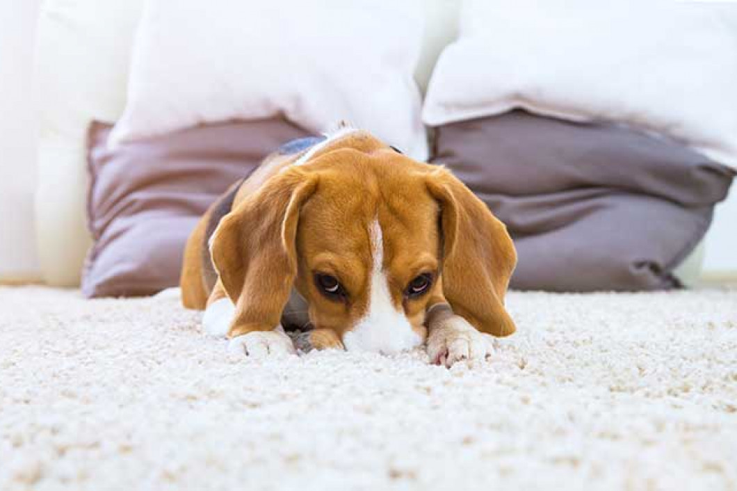 3 benefits of an aggressive carpet restorative cleaning